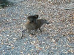 20101112福知山動物園10