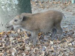 20101112福知山動物園12