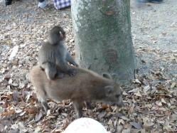 20101112福知山動物園11