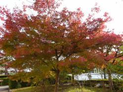 20101112福知山動物園紅葉