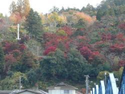 20101116紅葉~♪2