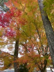 20101117大本さんの紅葉~♪5