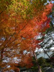 20101117大本さんの紅葉~♪8