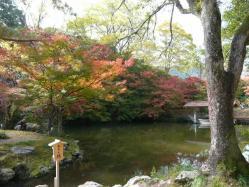 20101117大本さんの紅葉~♪7