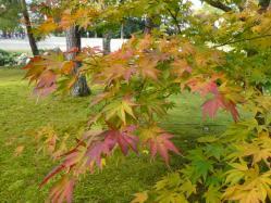 20101117大本さんの紅葉~♪6