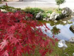 20101117大本さんの紅葉~♪9