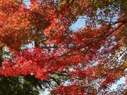 20101117大本さんの紅葉~♪2