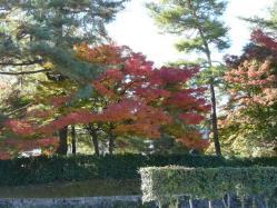 20101117大本さんの紅葉~♪