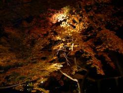 20101120紅葉ライトアップ2