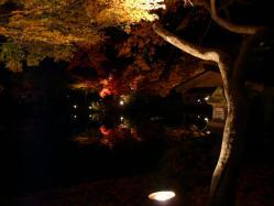 20101120紅葉ライトアップ3