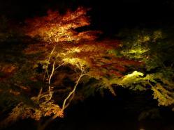 20101120紅葉ライトアップ4