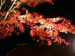 20101120紅葉ライトアップ6