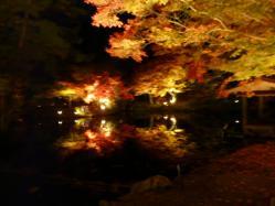 20101120紅葉ライトアップ