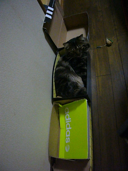 どの箱買う?