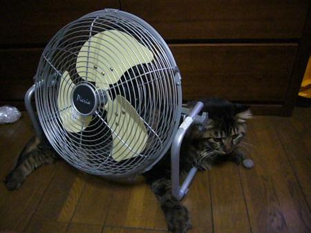 涼しい~~!