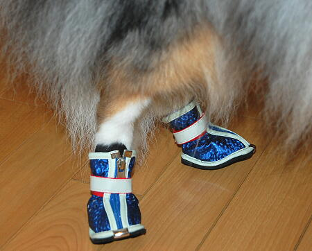 新しい靴は歩きやすいでしゅ