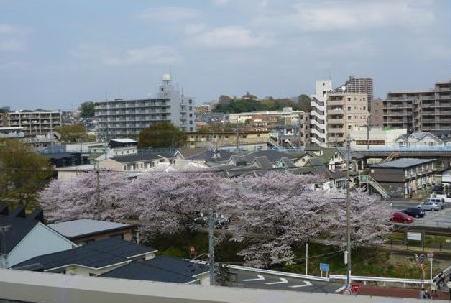 hanami2011002