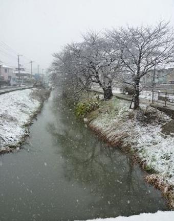 sakura2011002