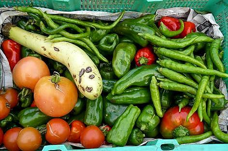 今年最後の夏野菜収穫♪