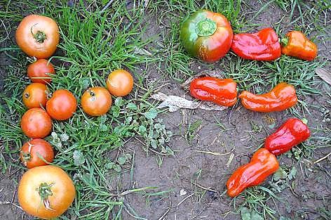 赤い夏野菜も♪