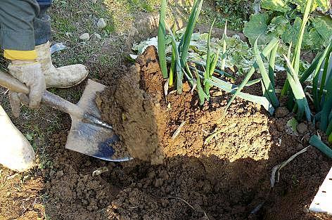 掘ってみよう♪