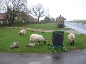 Sheeps+everywhere_convert_20091115005924.jpg
