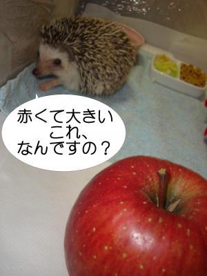 akakuteookii_300.jpg