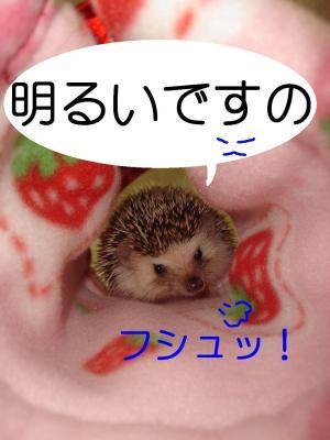 akarui_300.jpg