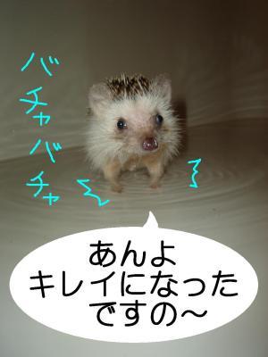 anyokirei_300.jpg