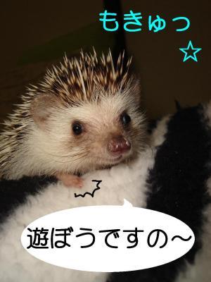 asoboudesuno_300.jpg