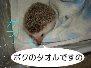 bokunotaoru_300.jpg