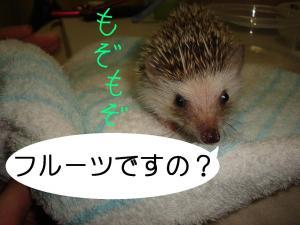 furu-tudesuno_300.jpg
