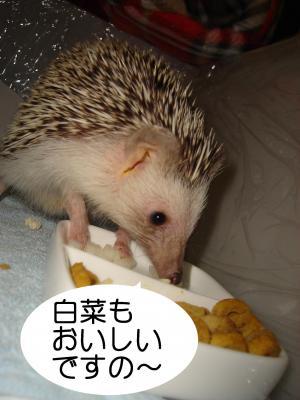 hakusai_300.jpg