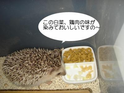 hakusai_400.jpg