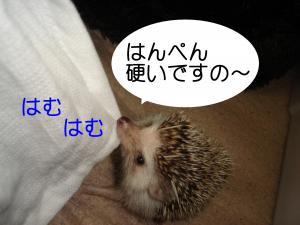 hamu2_300.jpg