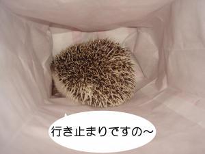 ikidomari_300.jpg