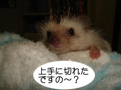 jyouzunikireta_400.jpg