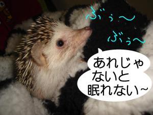 kamakurabeddobubu_300.jpg
