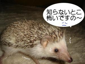 kowai_300.jpg