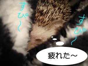 kurusupi-supi-_300.jpg