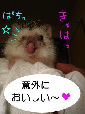 kyounoyasaikyaha_300.jpg
