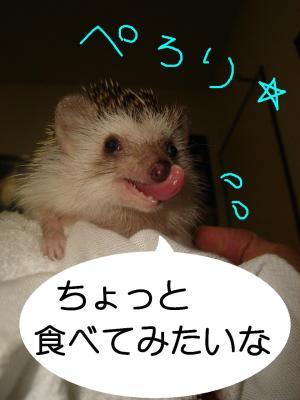 kyounoyasaiperori_300.jpg
