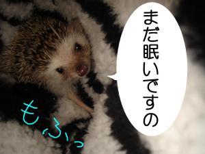 madanemui_300_2.jpg