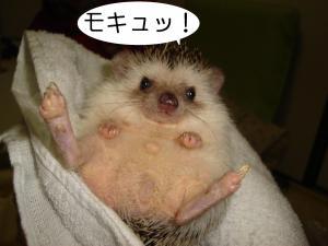 mokyu_300.jpg