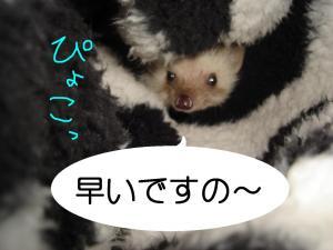 myuukarennda-pyoko_300.jpg