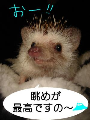 nagamegasaikou_300.jpg