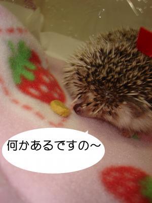 nanikaaru_300.jpg