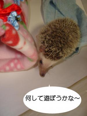 nanishiteasobu_300.jpg