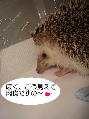nikusyoku_300.jpg