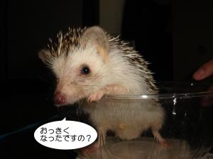 okkiku_300.jpg